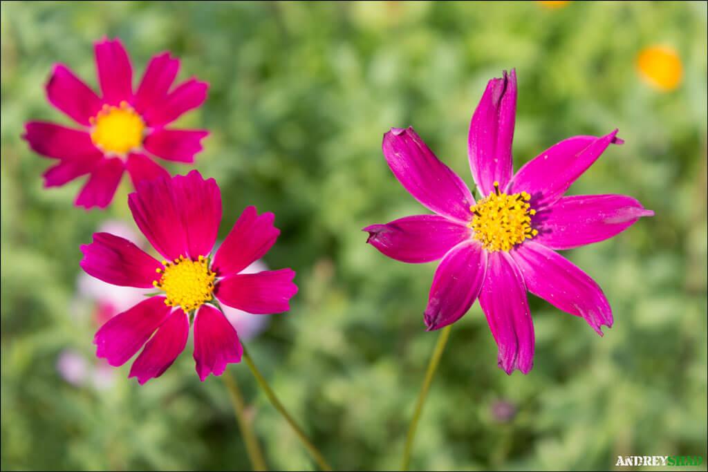 soveta-po-syomke-cvetov-01