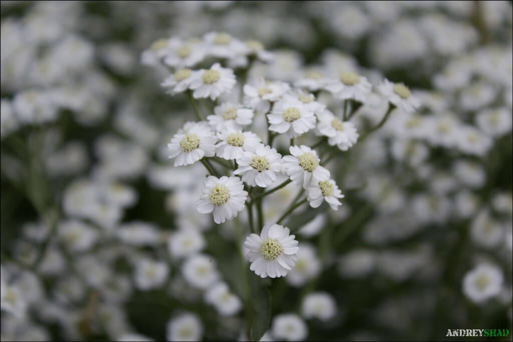 soveta-po-syomke-cvetov-02