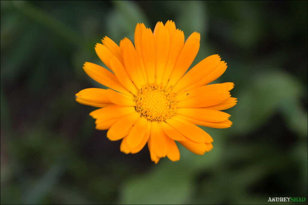 soveta-po-syomke-cvetov-03