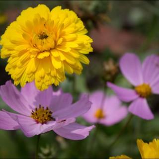 soveta-po-syomke-cvetov-04
