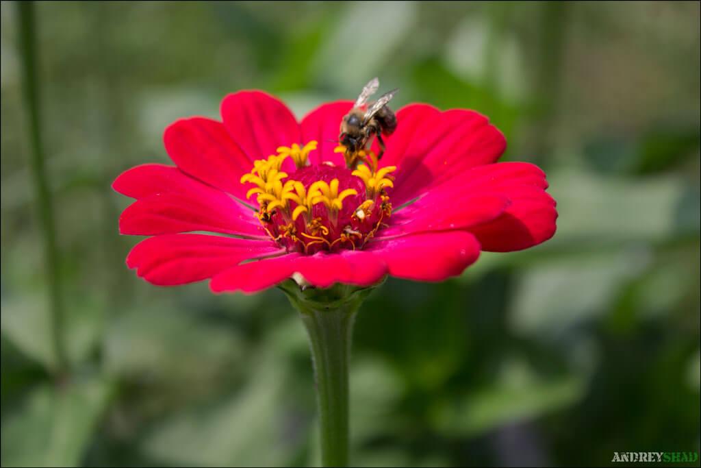 soveta-po-syomke-cvetov-05
